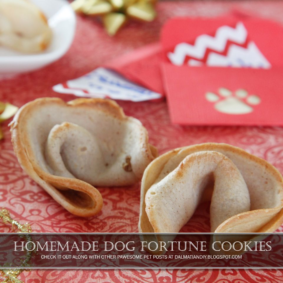 Recipe Chinese New Year Dog Fortune Cookie Dog Treat Recipes