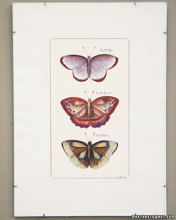Frameless Frames | Pinterest | Martha stewart, Craft and Butterfly