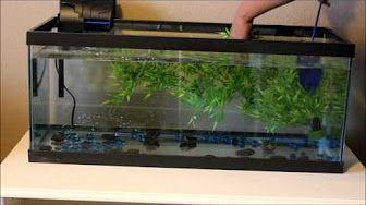 (132) How to Set Up a 20 Gallon Planted Aquarium (Low Tech ...