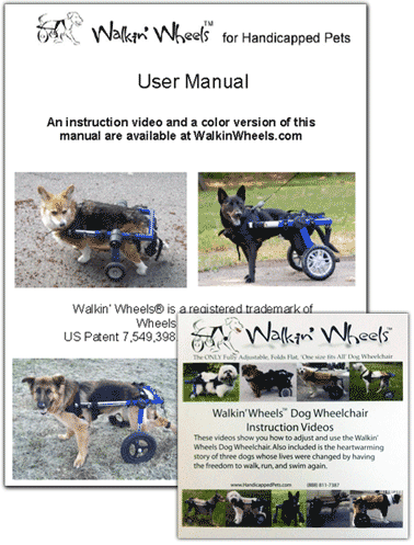 Conner Showing How Handsome He Is In His Eddie S Wheels Custom Built Dog Wheelchair Dog Wheelchair Wonderful Picture Dogs