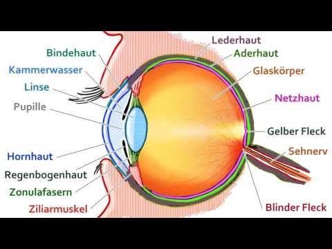 Aufbau des Auges - YouTube | Healthcare | Pinterest | Medical