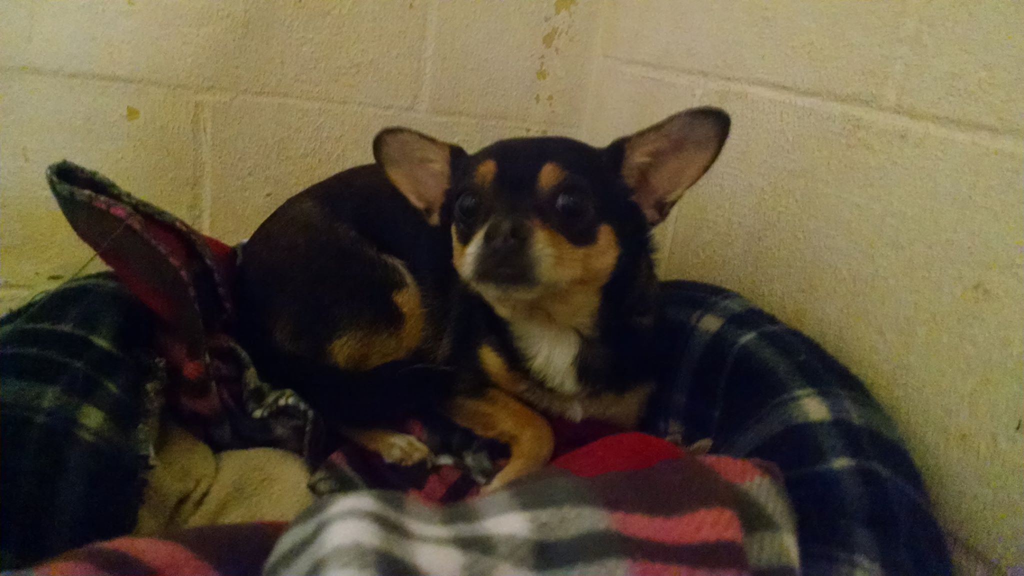 Black Tan Friends Of Mansfield Animal Shelter And Mansfield Animal Control Ct Https Www Facebook Com Ct Lost P Animal Control Animal Shelter Losing A Pet