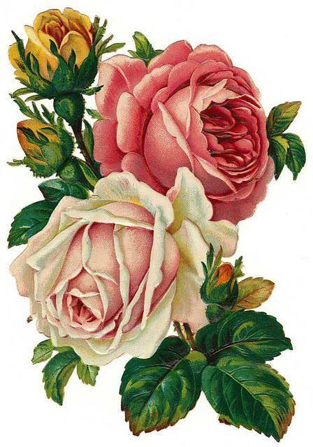 8c378dc287325 Vintage Roses printable | Flowers | Róże, Kwiaty i Vintage