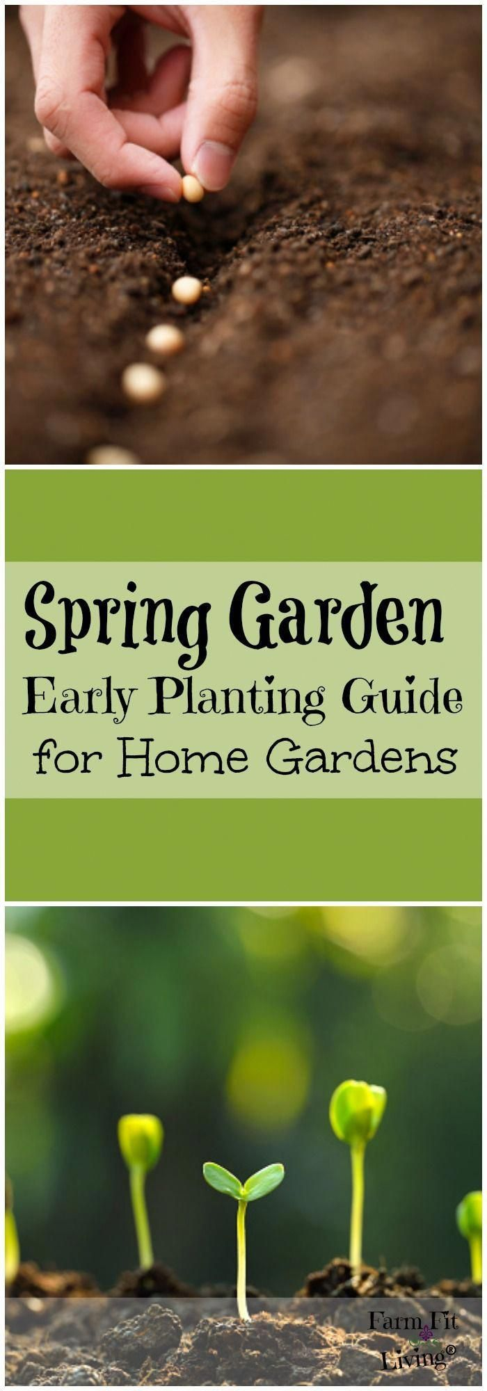 Spring Garden Early Planting Guide For Your Home Garden What To