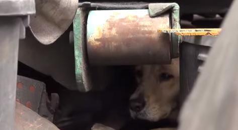 A cachorra se escondeu porque estava com medo. (Foto: Reprodução / Youtube / Hope for Paws)