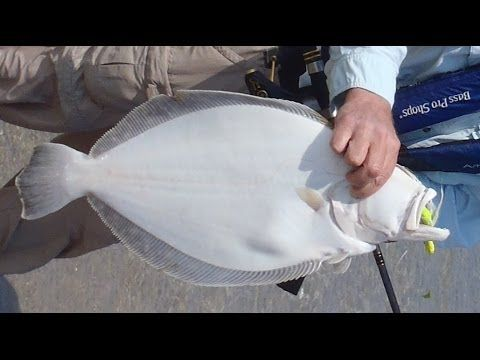 Do You Want To See One Of The All Time Best Flounder Rigs And Techniques For Catching Flounder Anywhere From Shor Flounder Fishing Fishing Tips Crappie Fishing
