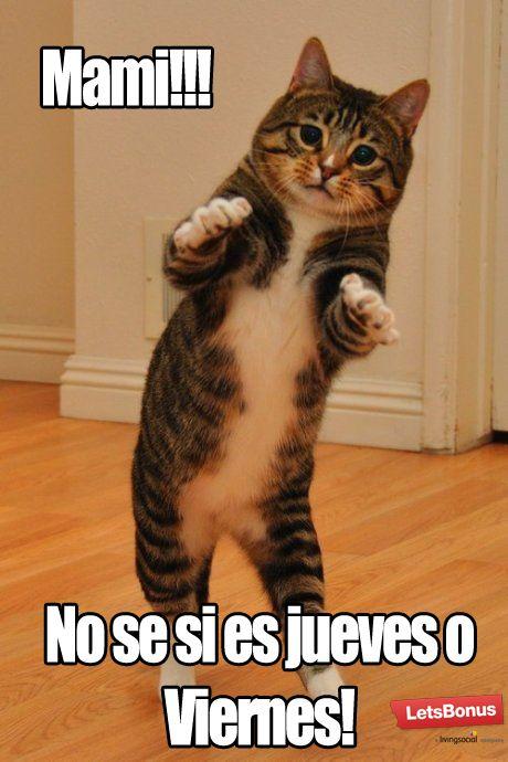 Buen Jueves Con Sabor A Viernes Disfruta El Fin De Semana Largo Gatos Bailando Gatos Gatos Bonitos