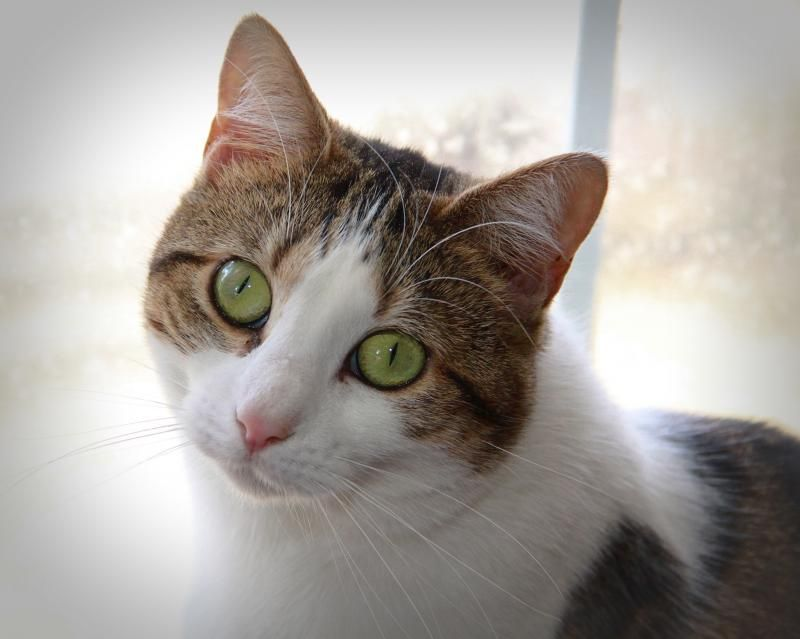 Adopt Kitty On Cat Adoption Pets Cats And Kittens