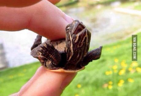 Baby Turtle Thinks It S Skydiving With Images Silly Animals Happy Animals Funny Animal Pictures