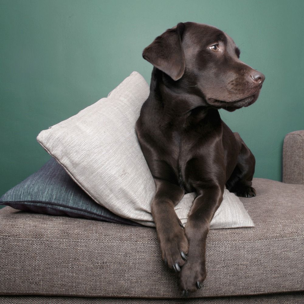Athena massey red alert pictures to pin on pinterest - Large Dogs In Apartments Pin Now Read Later