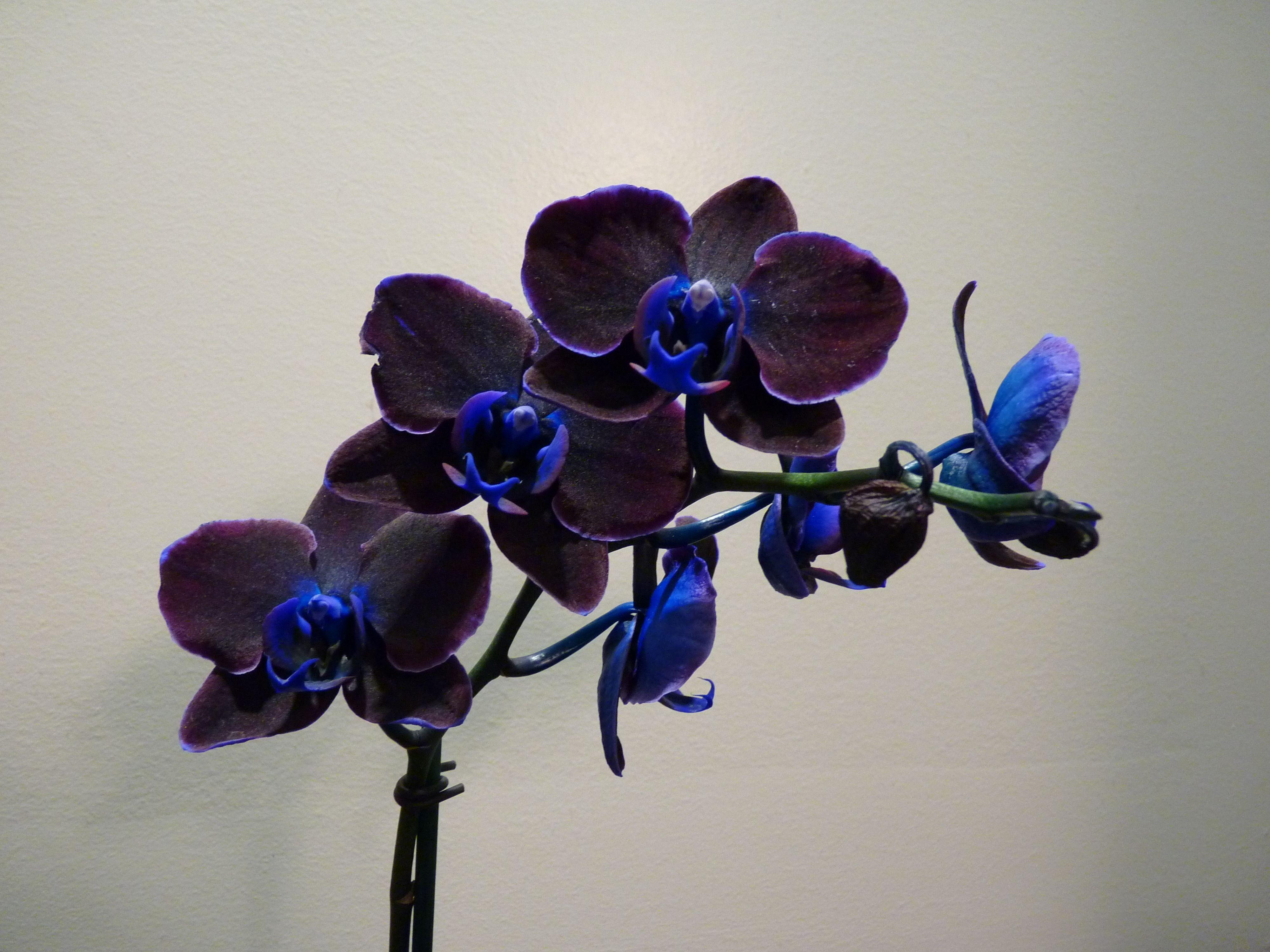 Букет-дублер свадьбу, купить цветок черная орхидея