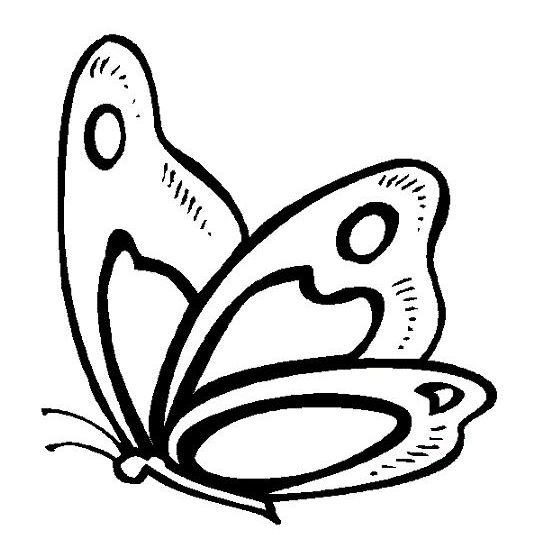 imagenes de mariposas dibujos  Buscar con Google  mariposas