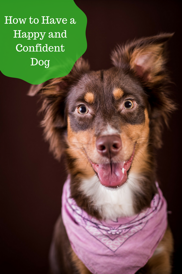 Boost Confidence 10 Things To Teach Your Dog Bark With It