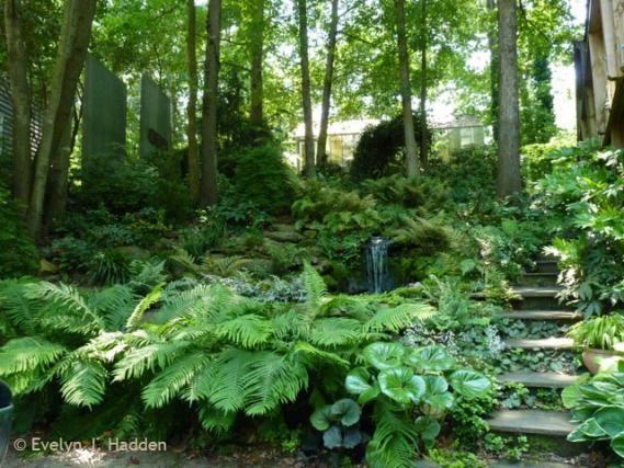 READER PHOTOS! Jay's garden in North Carolina, Day 1   Fine Gardening