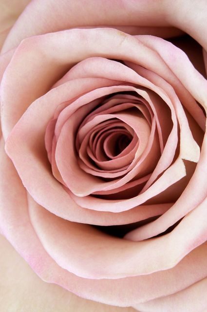 Christina hamoui especial pinterest boquet pale pink and pink roses pale pink one of my colors this will be in my boquet for sure alone with pale blues and lavendars more mightylinksfo