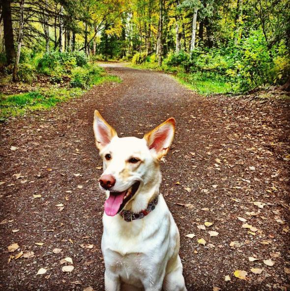 Pin on Alaska Dog Parks