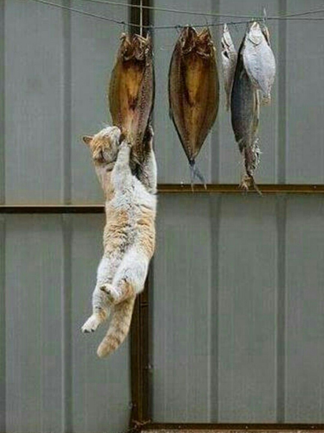Me Hanging onto my food for dear life. Crazy cats, Cute
