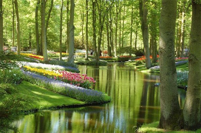 Keukenhof Gardens, Netherlands.   -    In my garden there is a large place for sentiment.  My garden of flowers is also my garden of thoughts and dreams.  The thoughts grow as freely as the flowers, and the dreams are as beautiful.  ~Abram L. Urban