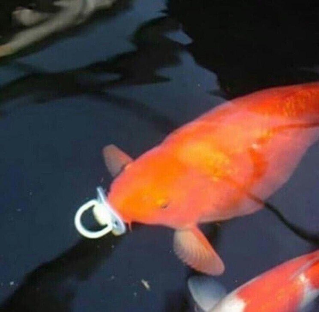 Обои профиль, рыбка, холст. Разное foto 12