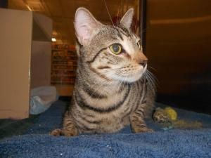Pin On Adoptable Cats From The Queenie Foundation In Ct