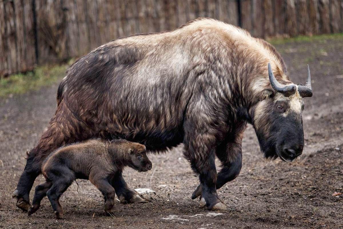 Moms of the animal kingdom (and their babies) Animal