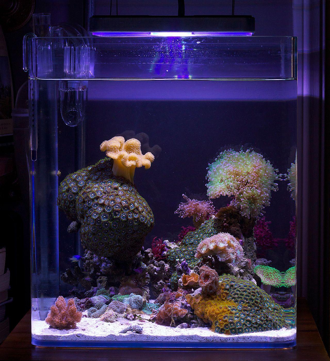 Justind823 2014 Featured Nano Reefs Featured Aquariums Monthly Featured Nano Reef Aquarium Profiles Reef Aquarium Coral Reef Aquarium Aquarium