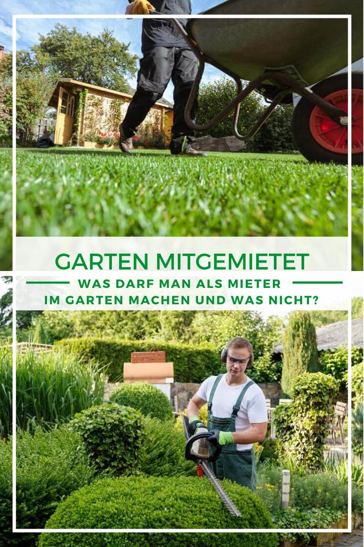Was Darf Man Als Mieter Im Garten Machen Und Was Nicht Garten Gartenpflege Mediterraner Garten