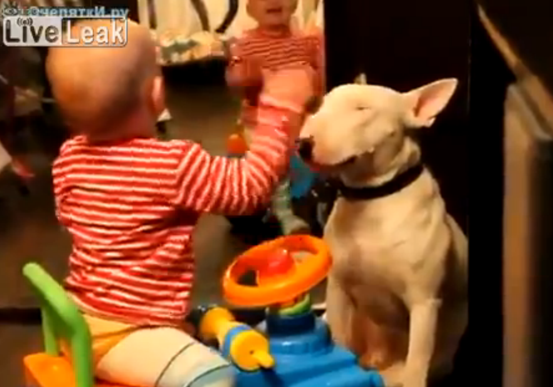 Parents Film As Toddler Gets Too Comfortable With Pet Dog (Video)