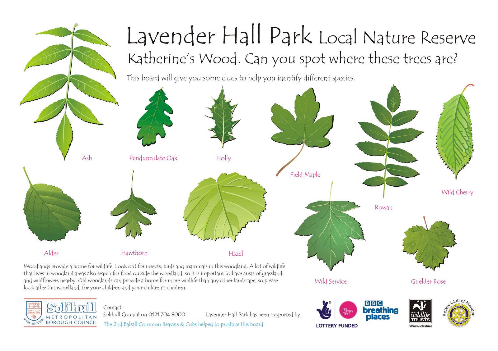 Jacqui Bricknell Environmental Interpretation Lavender