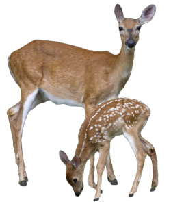 An Entry From Transparent Flowers Powered By Tumblr Com Deer Animals Images Png Images