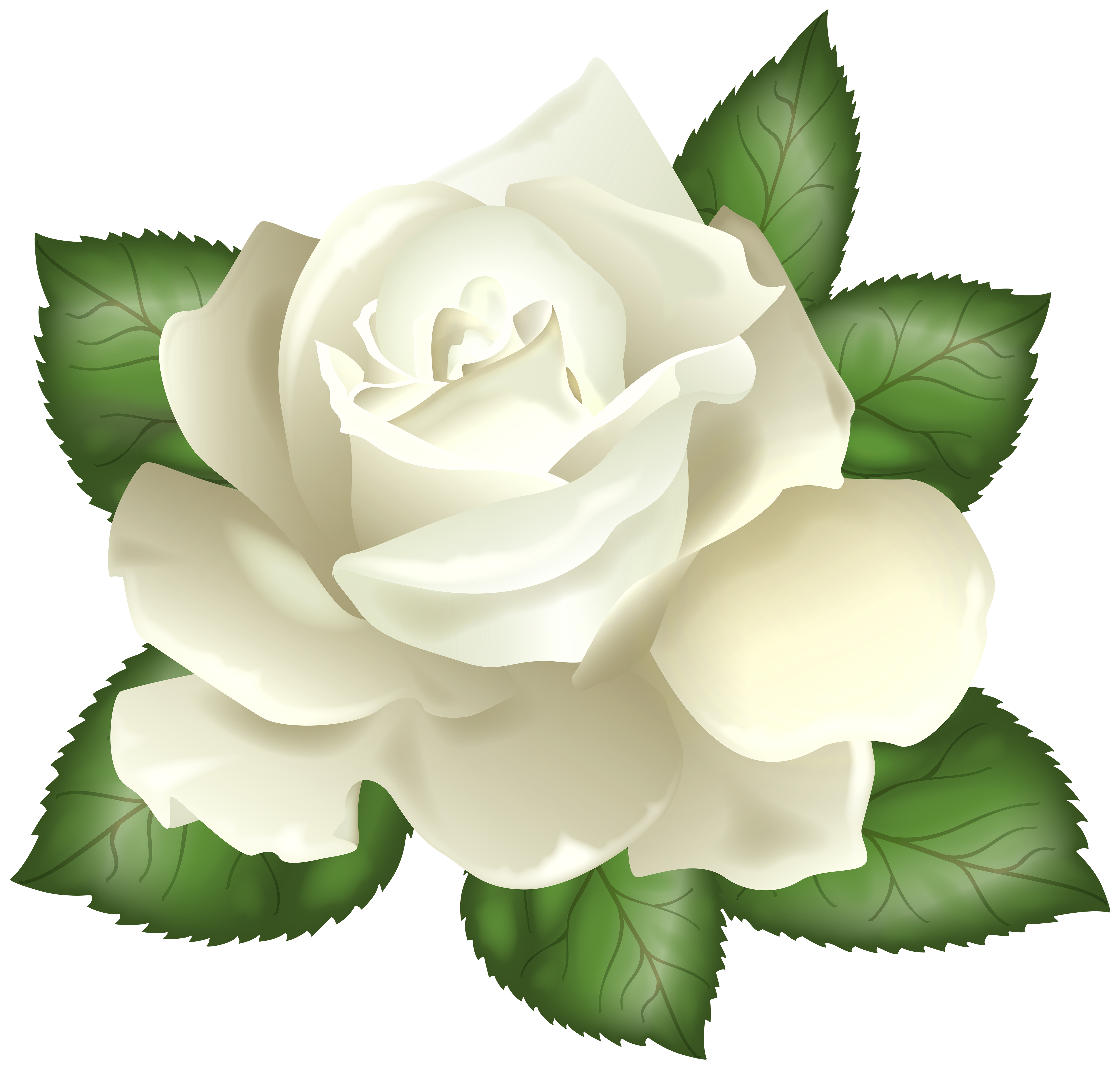 White_Rose_Transparent_PNG_Clip_Art_Picture.png (5000×4773