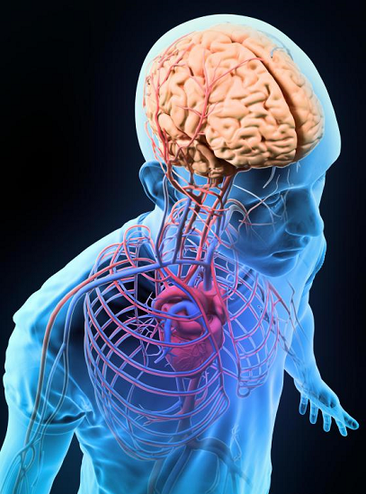 Researchers successfully detect early brain damage from hypertension ...