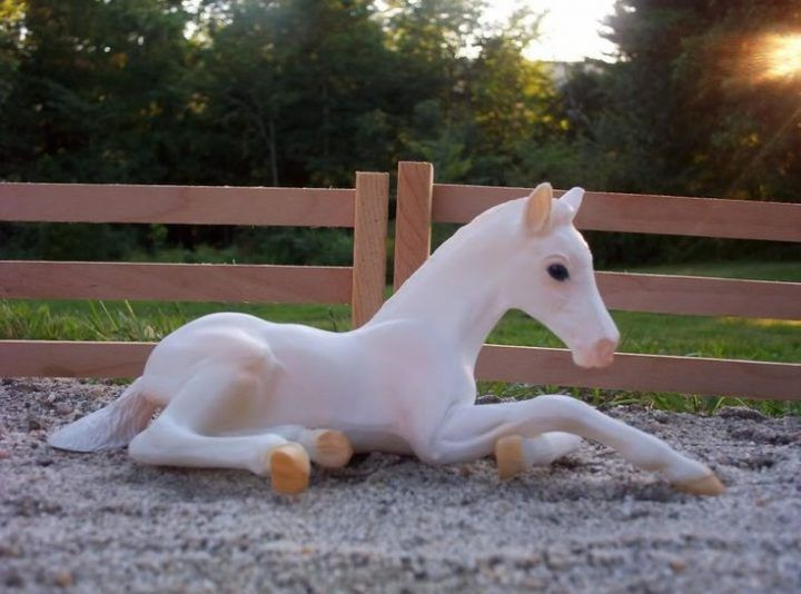 Photo of Image result for albino pony