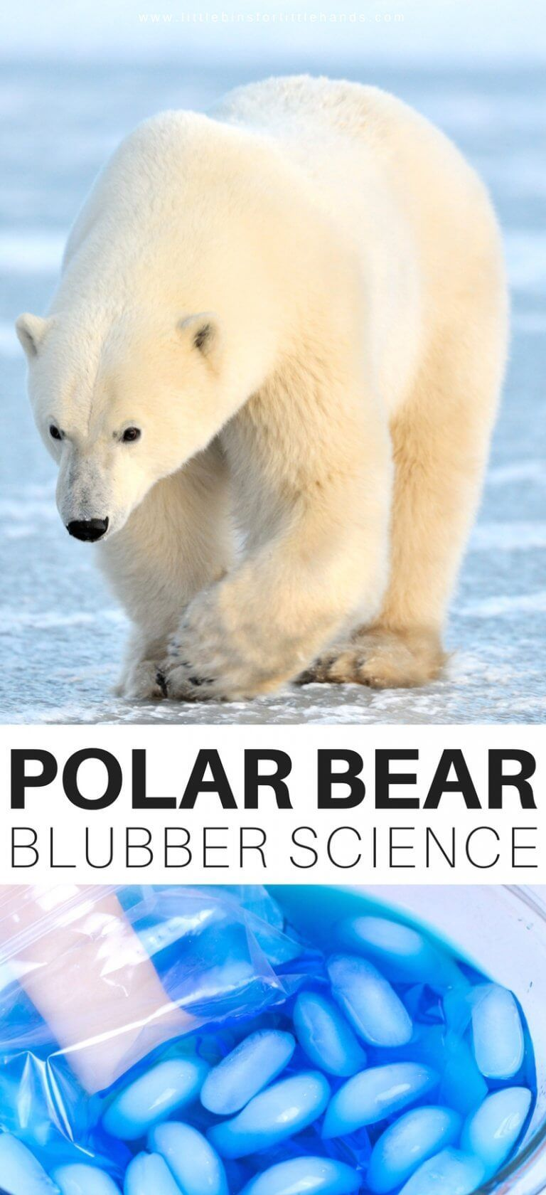 Polar Bear Blubber Experiment Cool Science Experiments Science