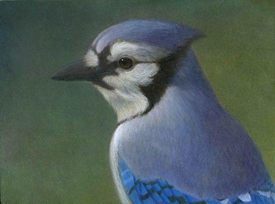Bluejay by  Prentice Studio Egg Tempera ~ 6 x 8