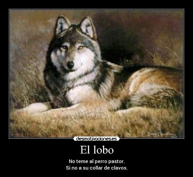 Lobos Cachorros Salvajes Buscar Con Google Animales Wolf