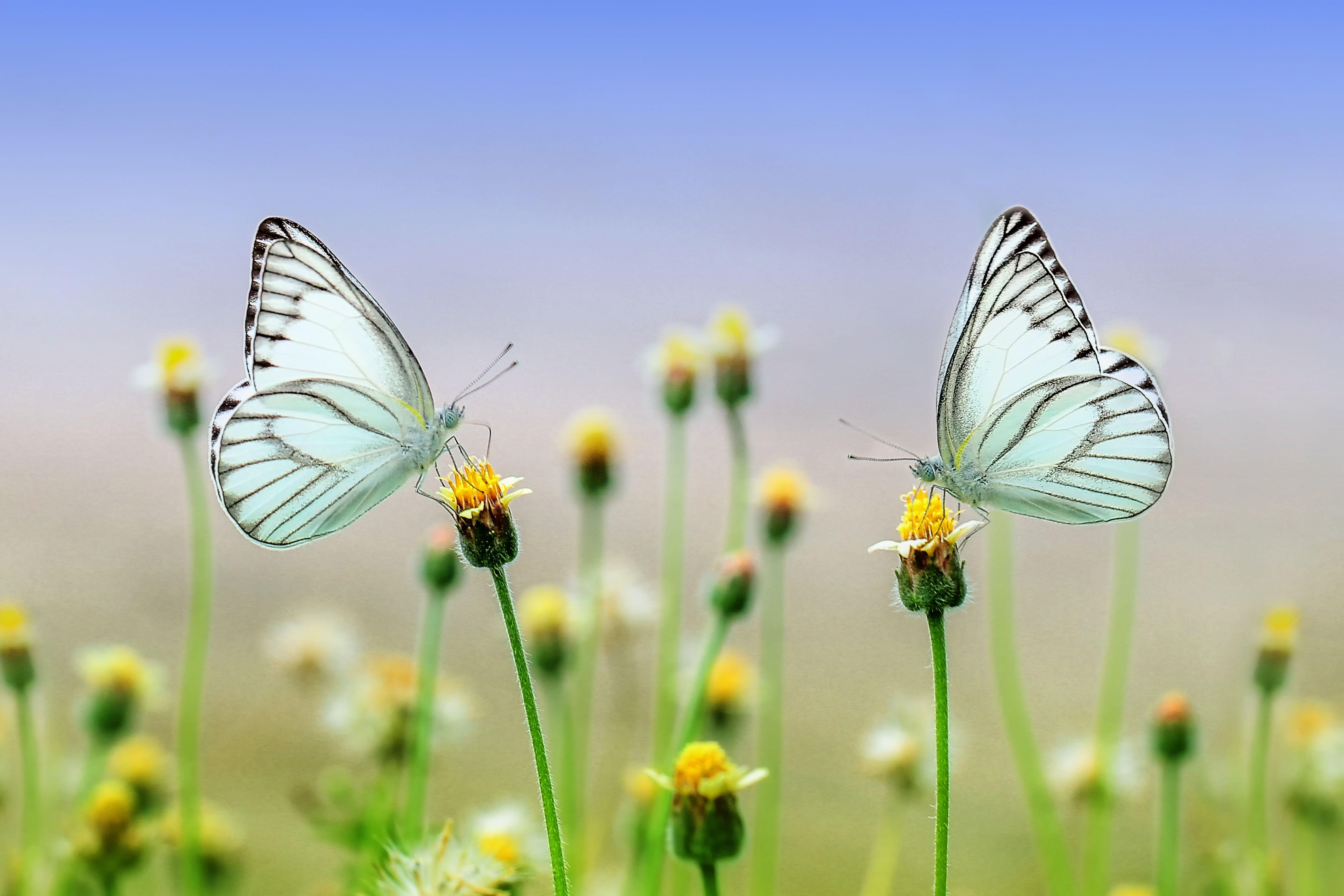 Beautiful Butterflies Naturbilder Schone Natur Schmetterling