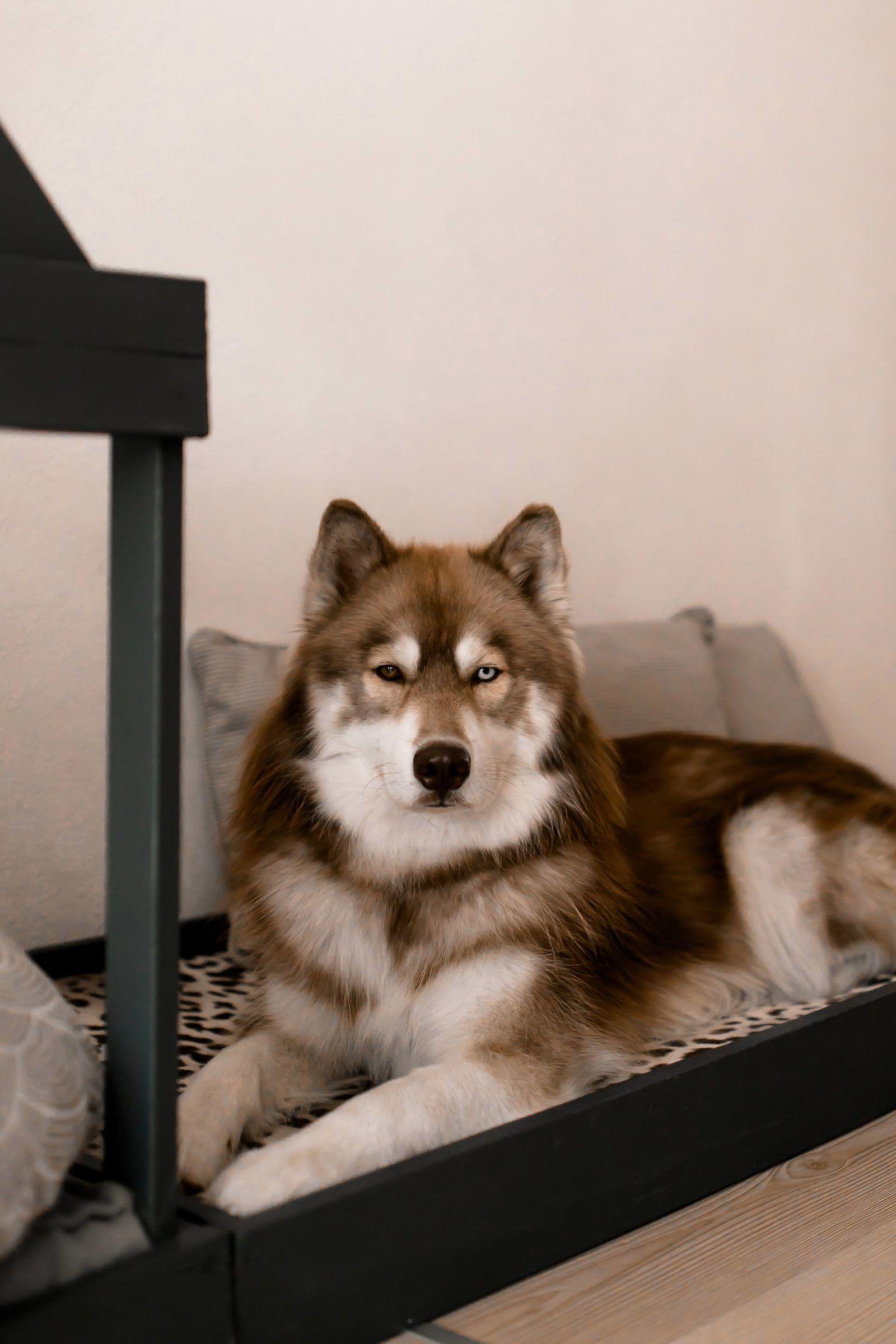 So Einfach Kann Man Sich Eine Moderne Hundehutte Fur Die Wohnung Selber Bauen The Pawsome Tyroleans In 2020 Hundehutte Hunde Haus Hund Diy