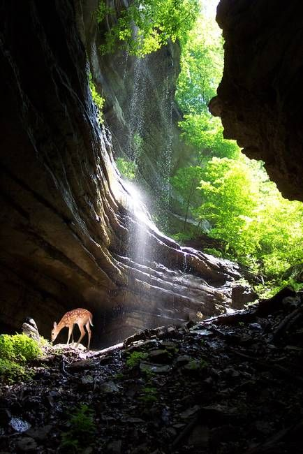 Fawn at waterfall by See Schlemmer