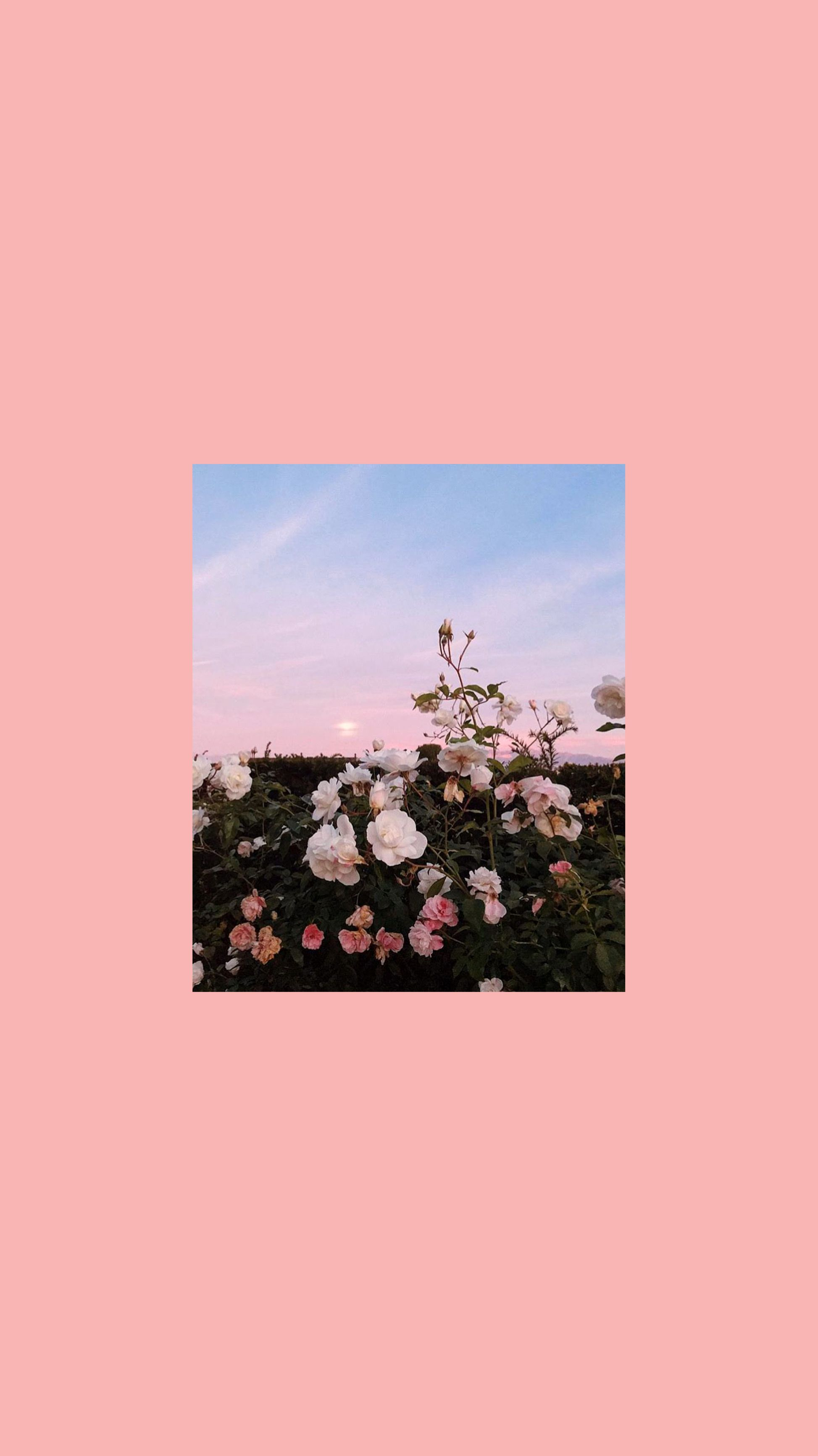 Wallpaper For Ipad Pro Flowers Photography Wallpaper Aesthetic Iphone Wallpaper Cute Wallpaper Backgrounds Aesthetic ipad pro wallpaper tumblr