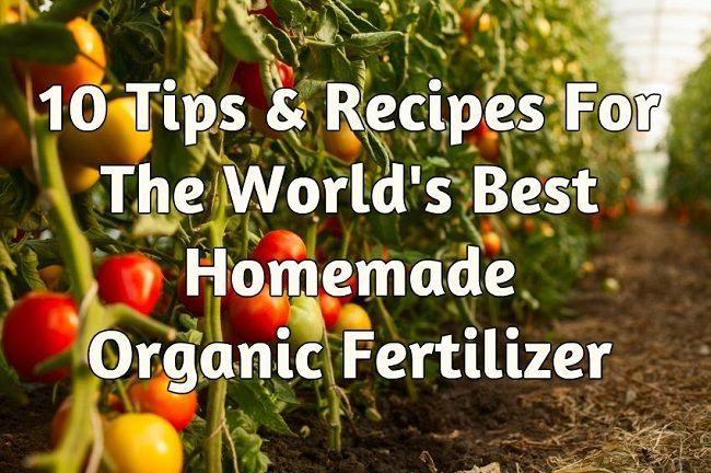 10 Tips & Recipes For The World's Best Homemade Organic Fertilizer