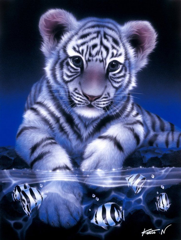 White Tiger Tattoos Baby White Tiger Tattoos Tiger Pictures