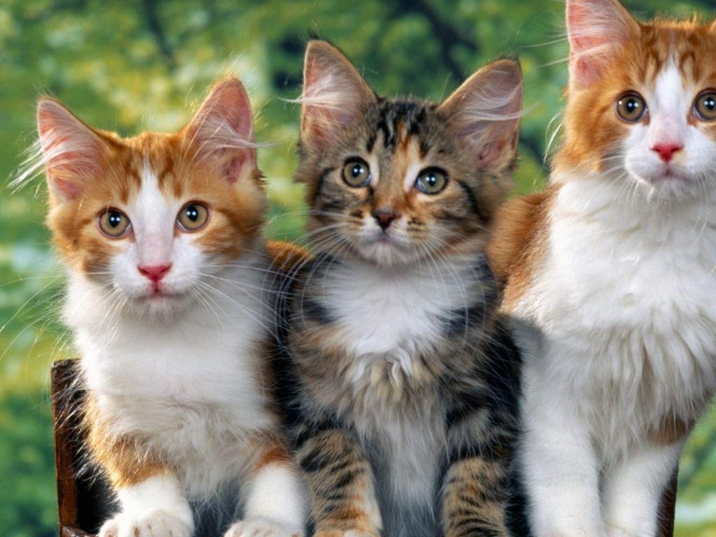 Full HD p Cute Cat Wallpaper HD Wallpapers 1024