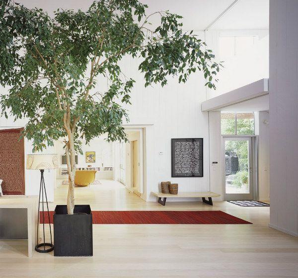biophilic-design-indoor-tree.jpg (600×560)   Architecture refs ...