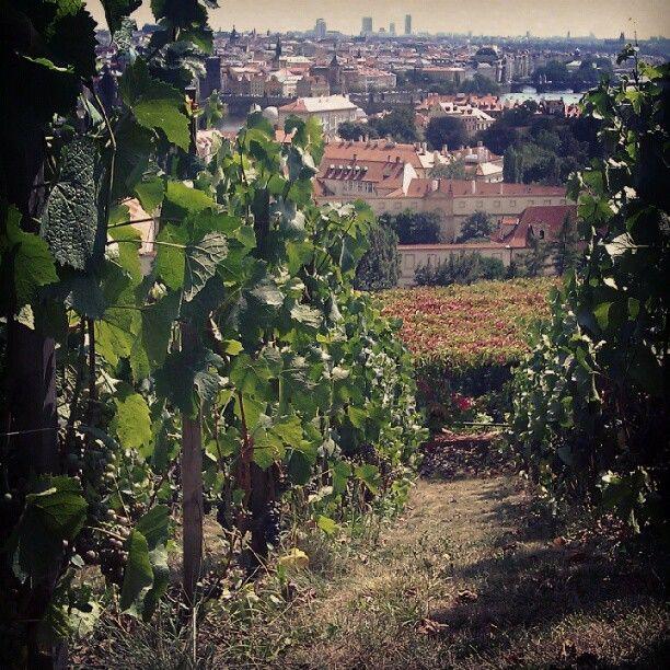 """@kiedys's photo: """"Nad dachami Pragi rosnie wino"""""""