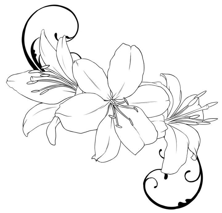 Line Art Lily : Lily tattoo outline drawings tattoos piercings