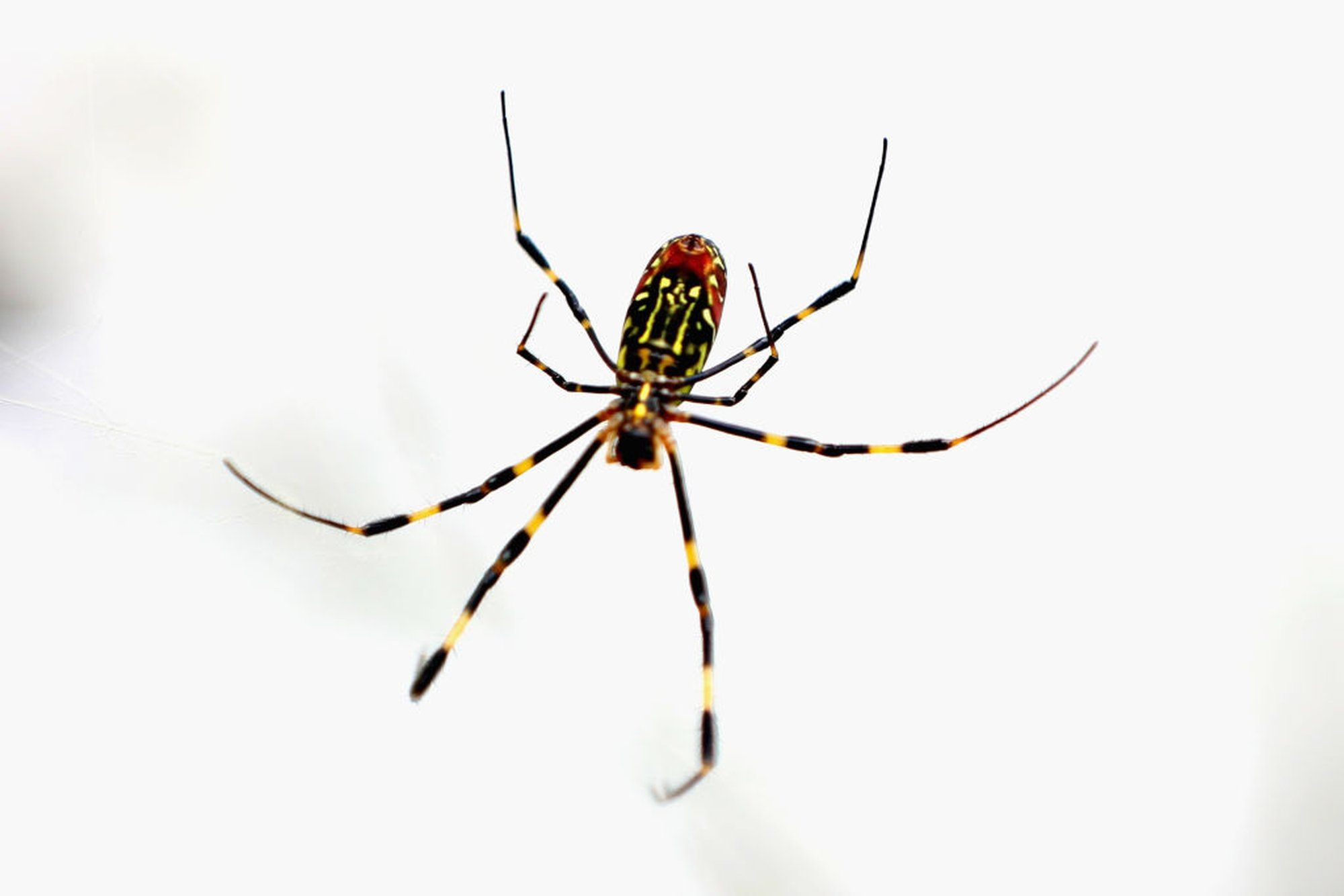 Spiders Can Fly Hundreds Of Miles Using Electricity