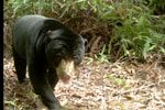 awesome Large animals invaluable for tree-seed dispersal and regeneration of tropical forests