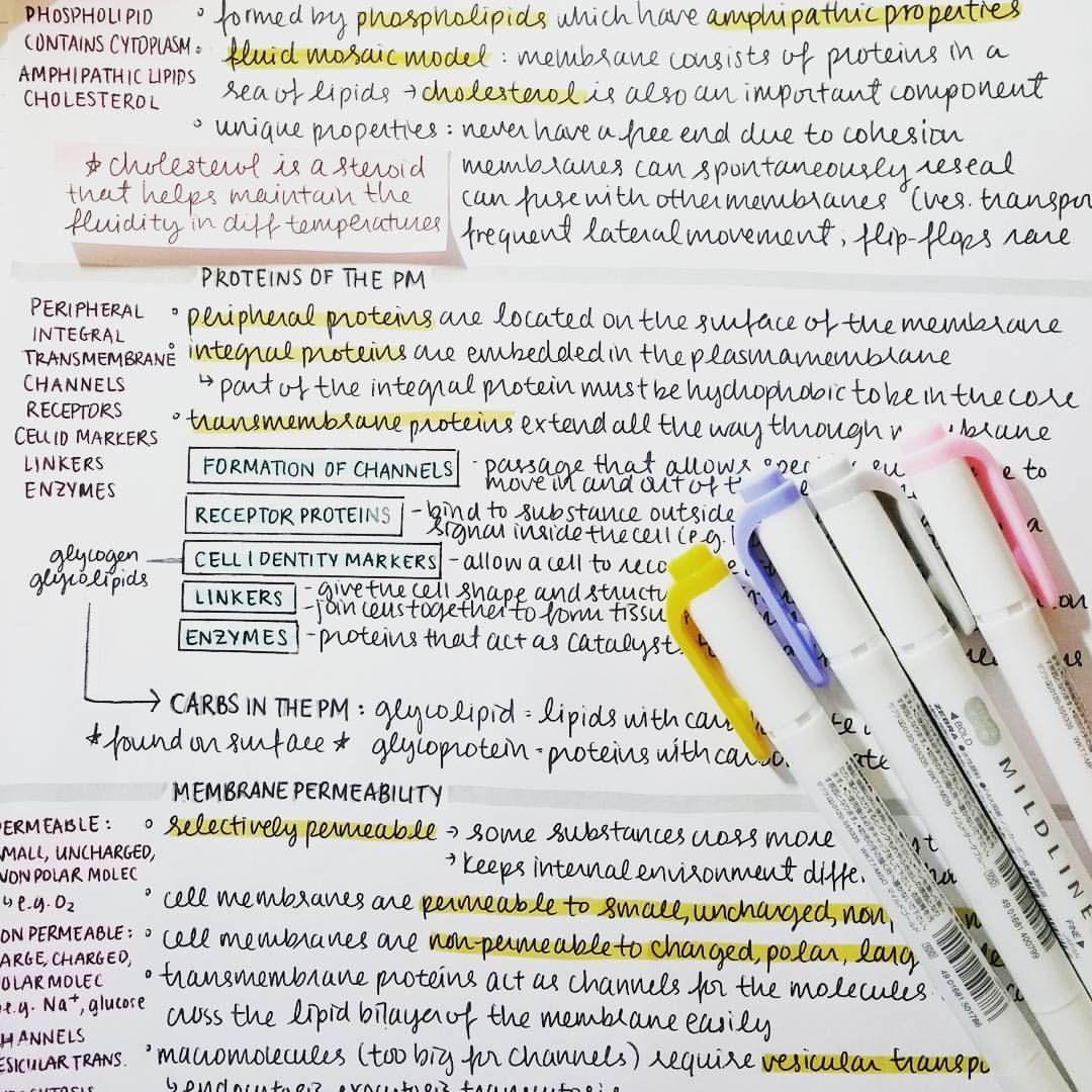 Study Inspiration, Study Hard