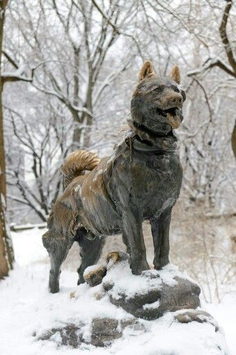 On this date in 1925, Balto, a sled dog, arrived in Nome, Alaska after braving 674 miles in blizzard conditions, at temperatures 50 degrees below zero, to deliver medicine needed to fight a deadly diphtheria epidemic. See this statue of Balto in Central Park at the East Drive at 67th Street.